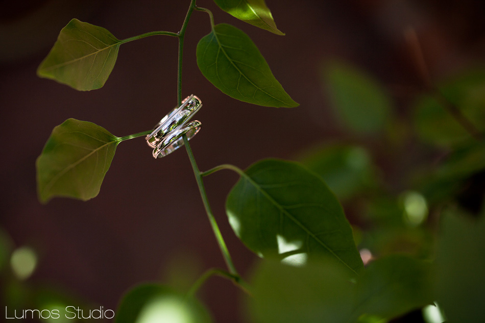 Wedding rings on ivy